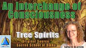 An Interchange of Consciousness by the Tree Spirits